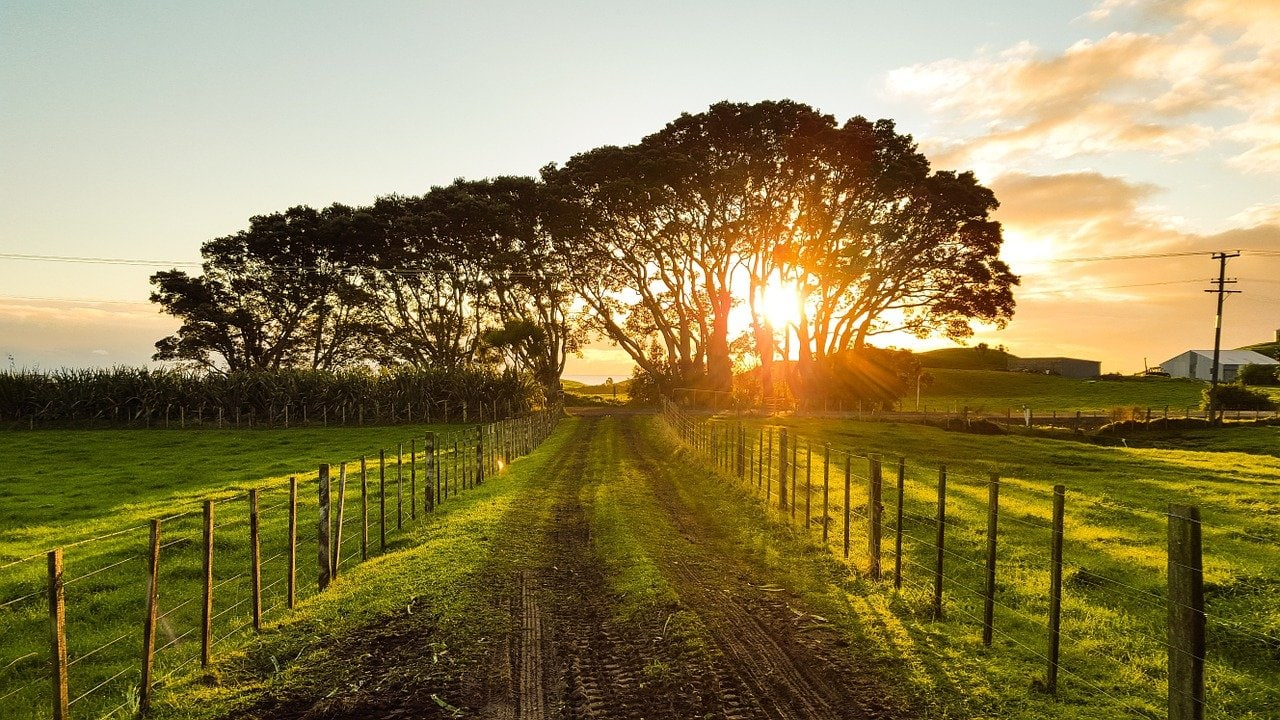 trees, sunset, fence-1149680.jpg
